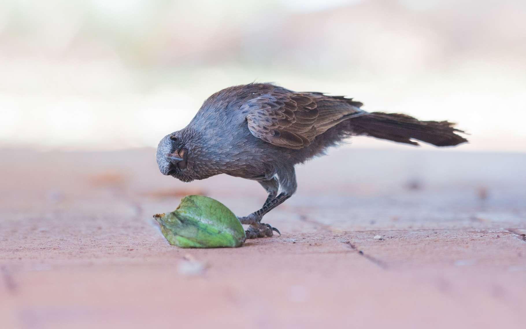 Les fourmis sont aussi reconnues pour leurs capacités cognitives.