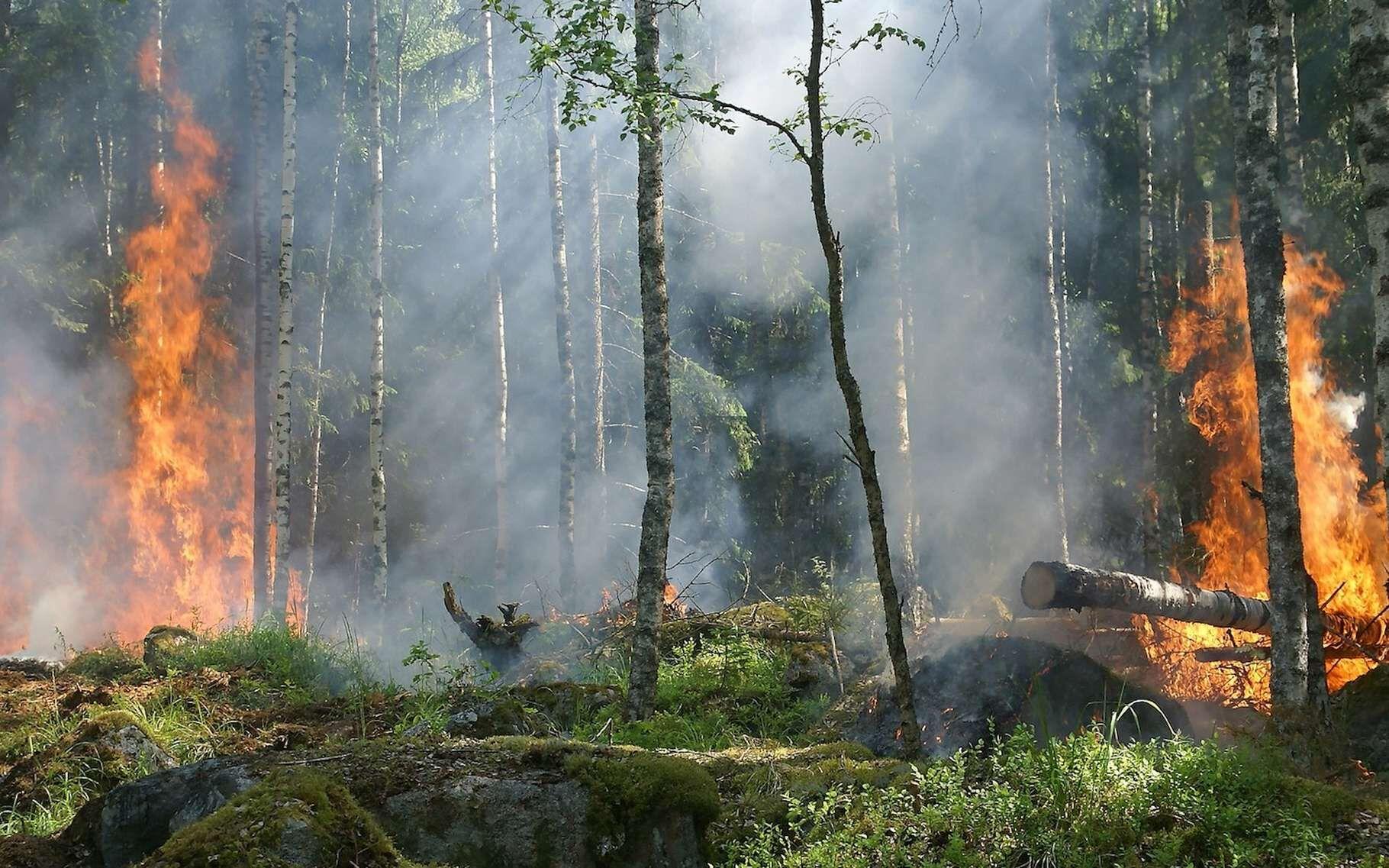 Et les officiels craignent aujourd'hui que ce gigantesque feu de forêt ne puisse pas être contenu avant... le mois de novembre !