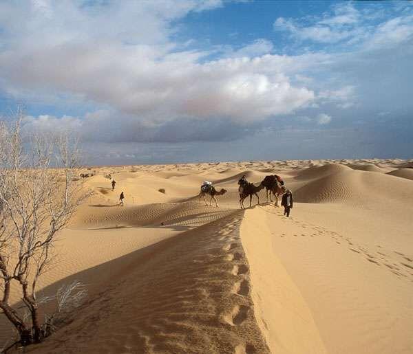 Mais, revenons à nos fourmis du Sahara.